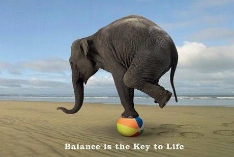 слон балансирует на шарике